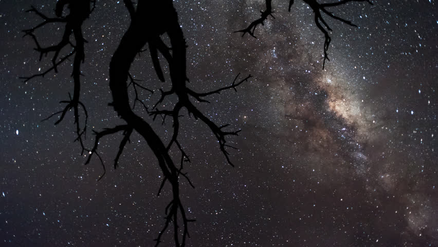 Linear, pan and tilt timelapse shot from a low angle shooting up towards a dead acacia tree, silhouetted against the African night sky with the Milky Way moving through.