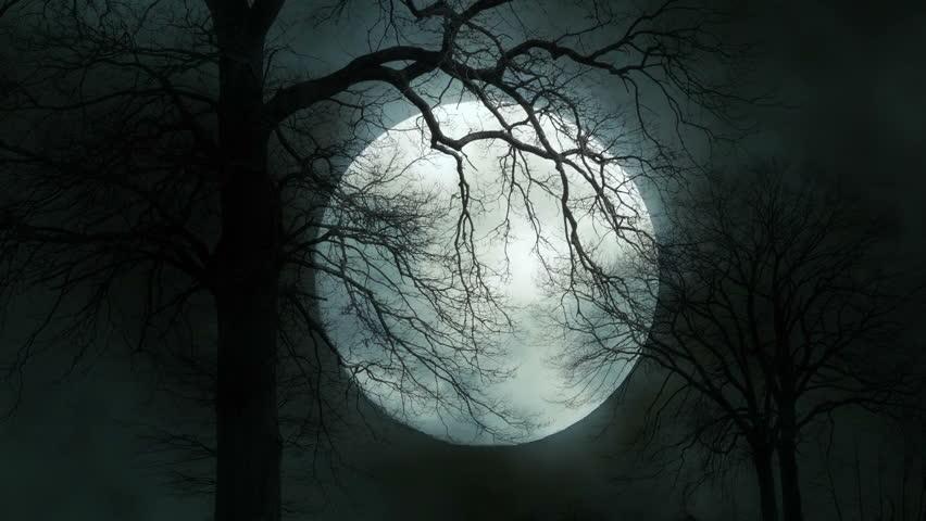trees night moon blotch - photo #15
