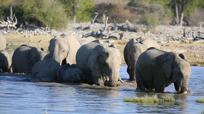 Mom and baby elephants getting into waterhole in Etosha