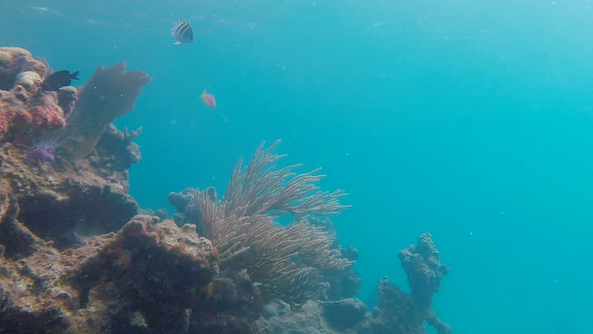 Sea fans footage stock clips videos for Fish swimming backwards