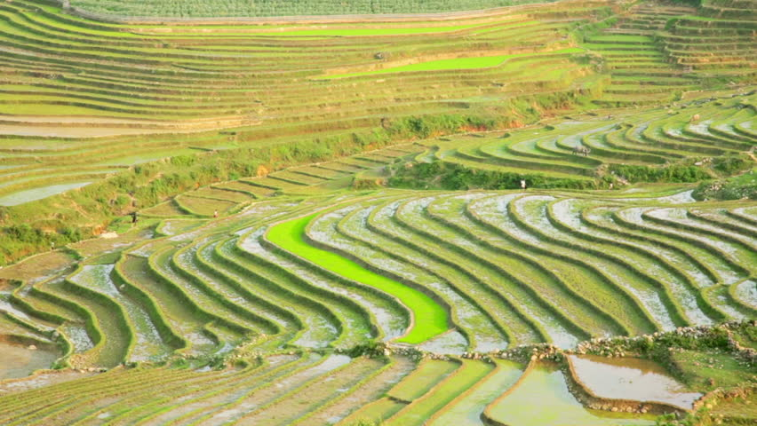 Gorgeous farm fields rice paddy terraces sapa vietnam for Terracing definition in agriculture