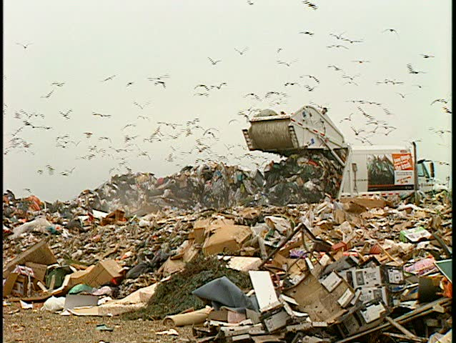 garbage dump wider lots of gulls. (BetacamSP)