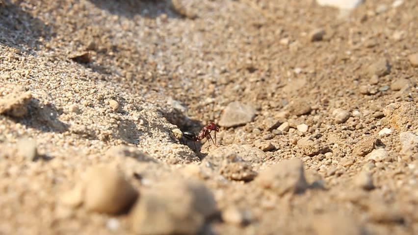 Header of ANTS