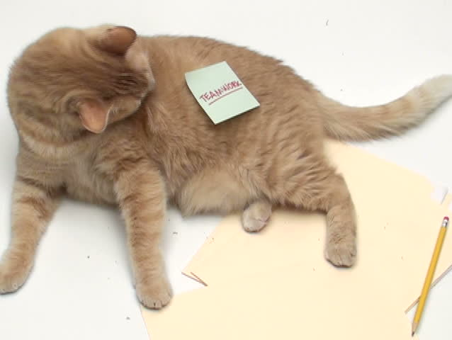 "Cat with post it note ""Teamwork"" - NTSC - SD stock footage clip"