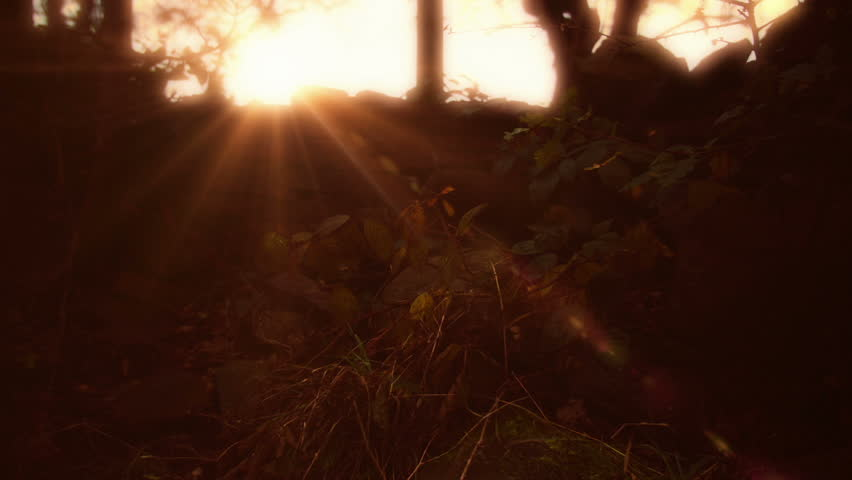 Fall/Autumn golden Sunshine into a wooded area HD stock footage. A low Sun casting it's golden light rays into a wooded area in October.