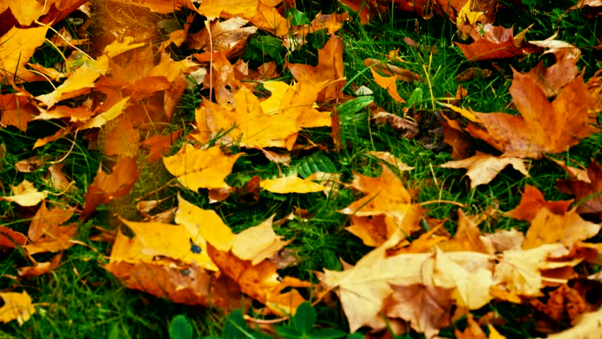 Colourful autumn leaves lying on a grass