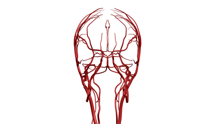 Brain Arteries HD