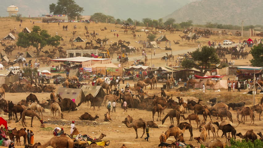 PUSHKAR,INDIA-November 02,2014 :Time Lapse video of unidentified people and tourists visiting traditional Pushkar Camel Fair, while camel dealers trades cattle during the 5 day fair in Pushkar,India. - 4K stock footage clip