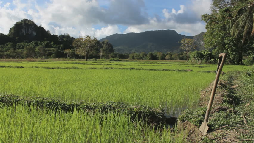 Shovel in a green rice field, Palawan, Philippines