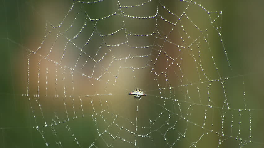 Spider web in rain in Kerala, India