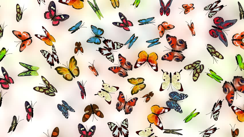 butterflies background, loop-able 3d animation - HD stock video clip