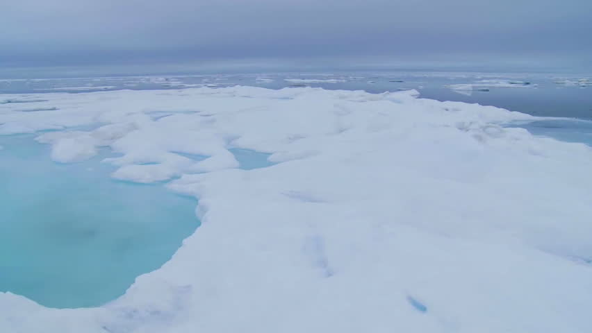CIRCA 2010s - A pan across sea ice reveals walrus in the distance.