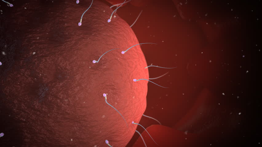 A sperm successfully penetrates an egg's wall and gets inside - HD stock footage clip