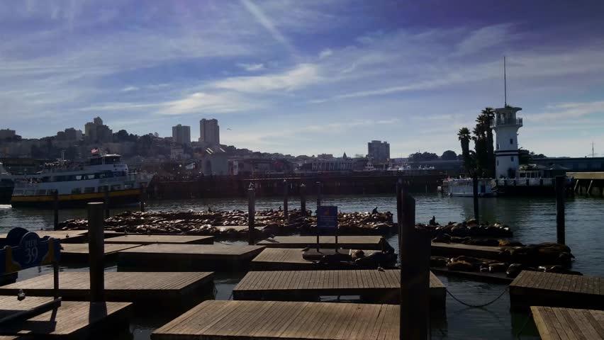 San Francisco, California - February, 2014 - Sea lions on Pier 39.
