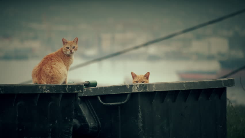 Stray alley cats on a garbage bin in the big city.A small collection of clips of a group of alley cats sitting on a dumpster bin in the city.