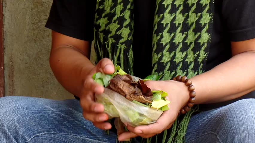 AGUINALDO, IFUGAO - APRIL 3, 2015: Mature adult young man chewing betel nut prepare leaf