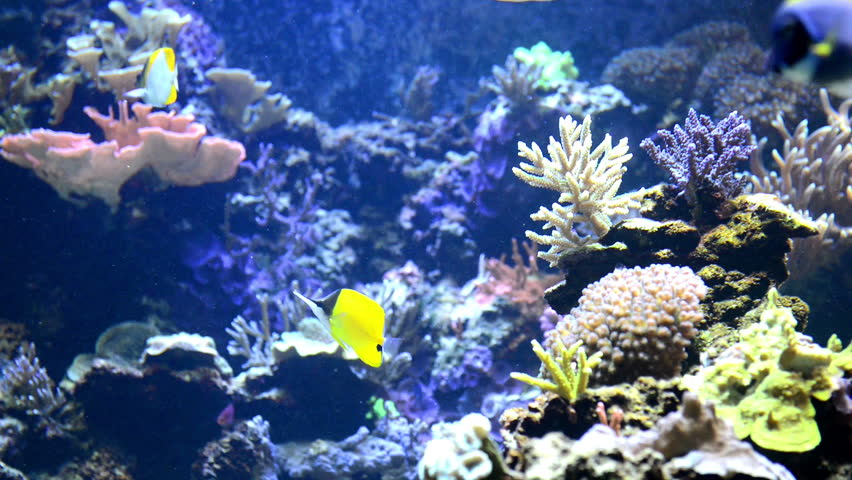 exotic fishes corals hd - photo #11