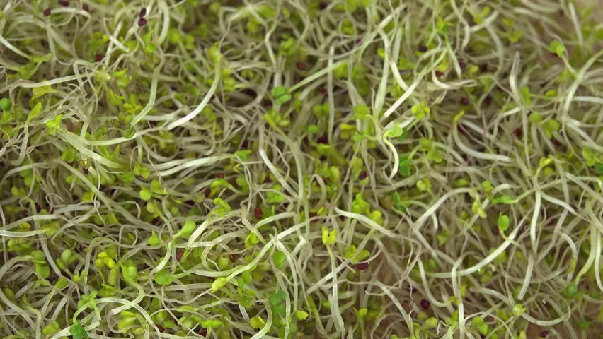 Heap of rotating Broccoli Sprouts (not loopable 4K footage)