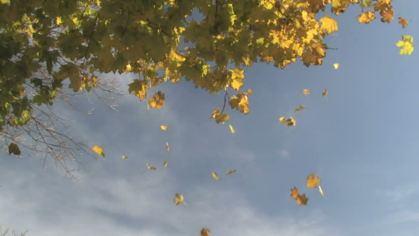 Autumn Leaves Falling 1 - HD stock footage clip