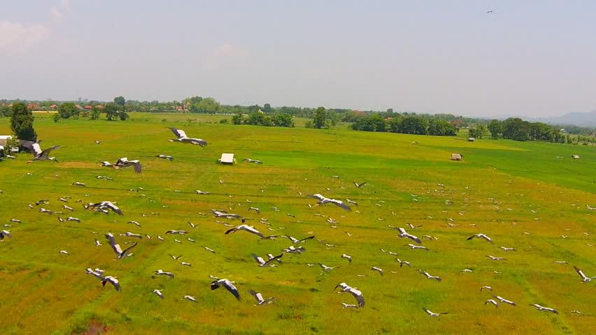 description aerial flying birds - photo #42